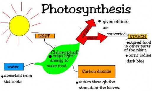 what does photosythesis mean